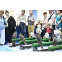 Abu Dhabi Falcon Hospital: 2-Hour Tour