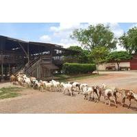 Full Day Johor Bahru Countryside and Farm Tour from Singapore