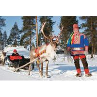 Lapland Reindeer Safari from Rovaniemi Including Sleigh Ride