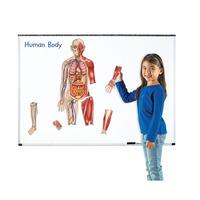 Learning Resources Double sided Magnetic Human Body