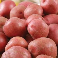Potato \'Setanta\' - 4 kg of potato tubers