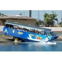 San Diego Shore Excursion: San Diego Seal Tour